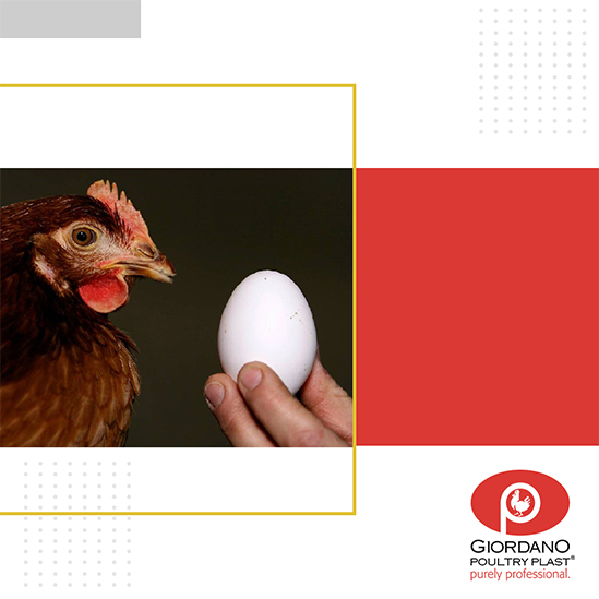 What came first, the chicken or the egg?