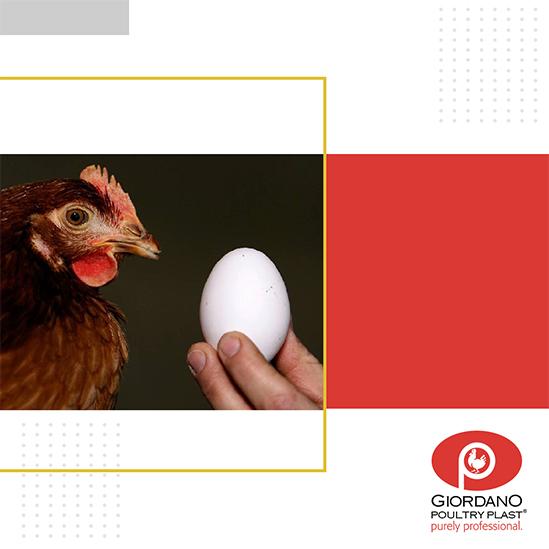 Qu'est-ce qui est arrivé en premier, la poule ou l'œuf?